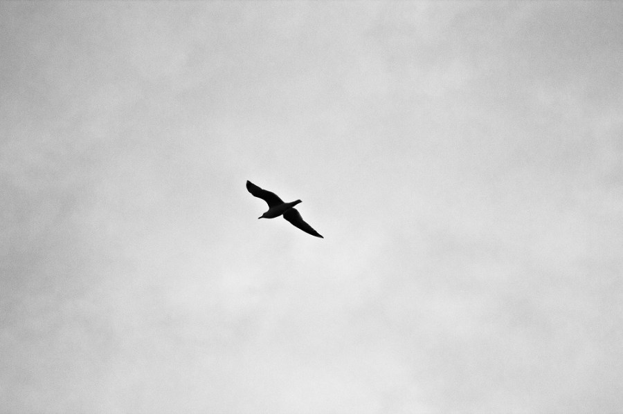 solitary bird in against a cloudy sky