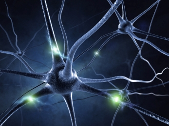 Active nerve cell in human neural system Source: www.unisa.edu.au
