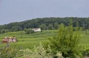 Epernay Vineyards.