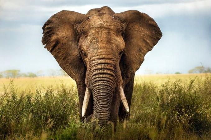 Elephant - Friends