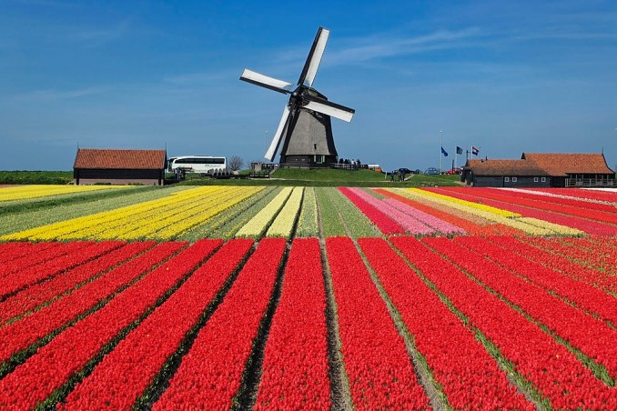 Beautiful Flowers in Holland