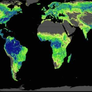 Global Tree restoration to stop climate change