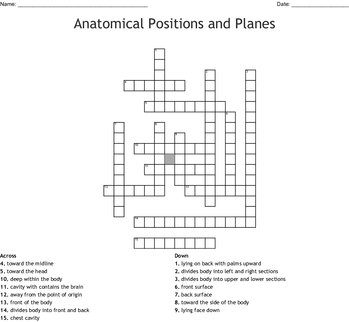 Anatomical Fun Crossword