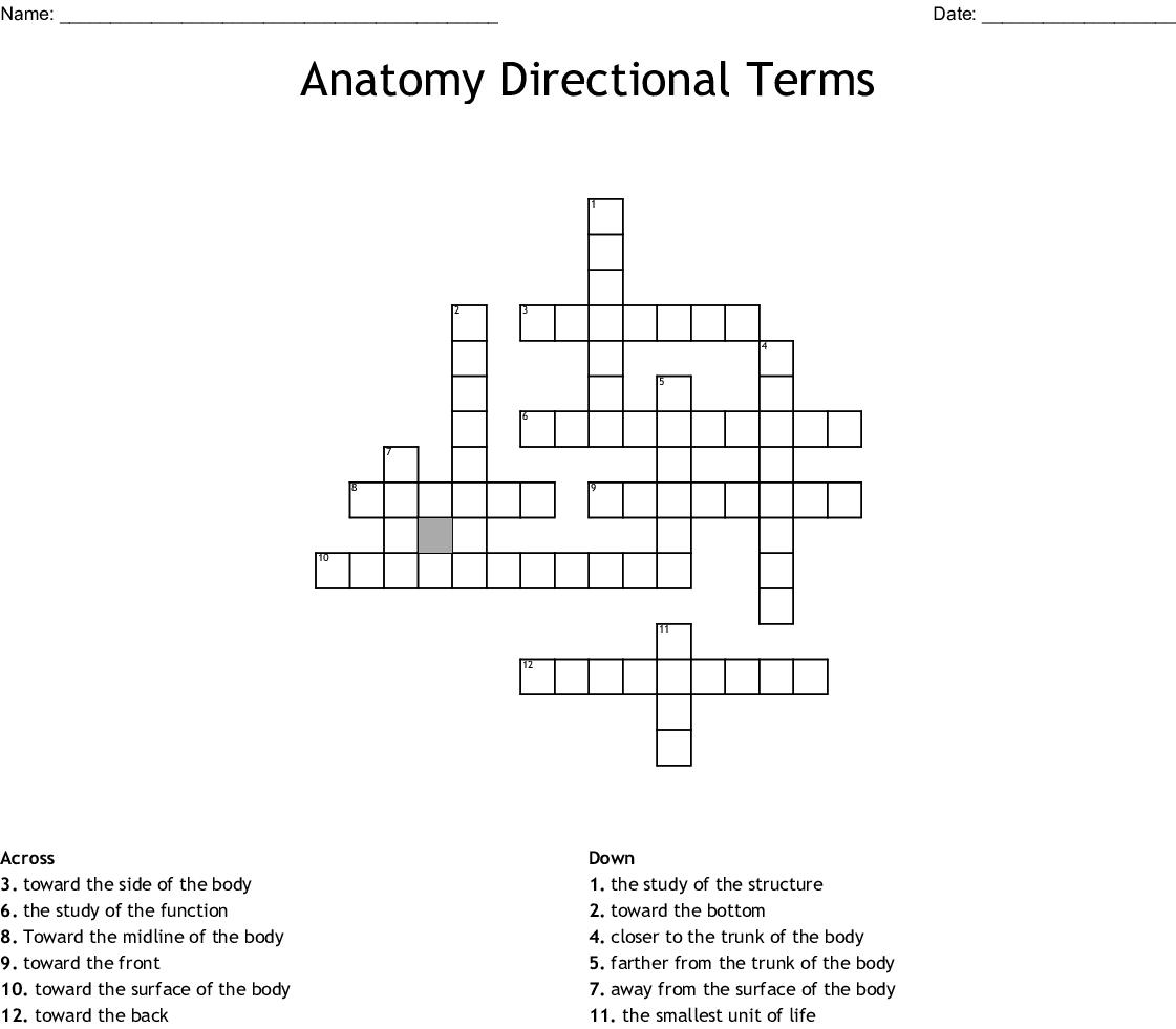 Anatomy Directional Terms Crossword