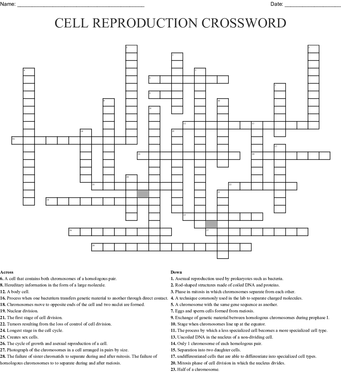 Chapter 11 Cell Reproduction Worksheet Answers