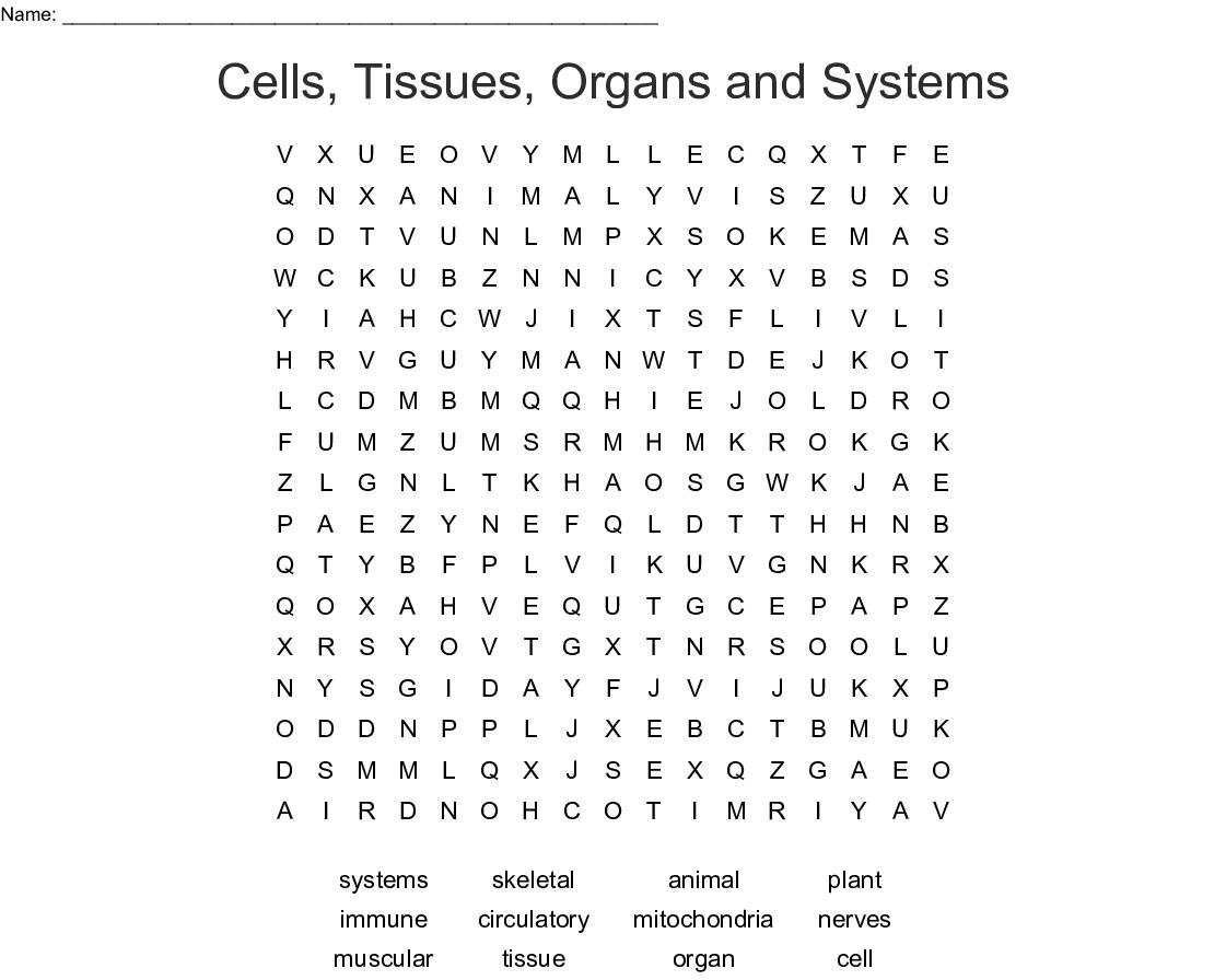 Animal Immune System Worksheet
