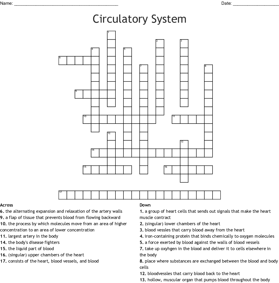 Heart Anatomy Crossword