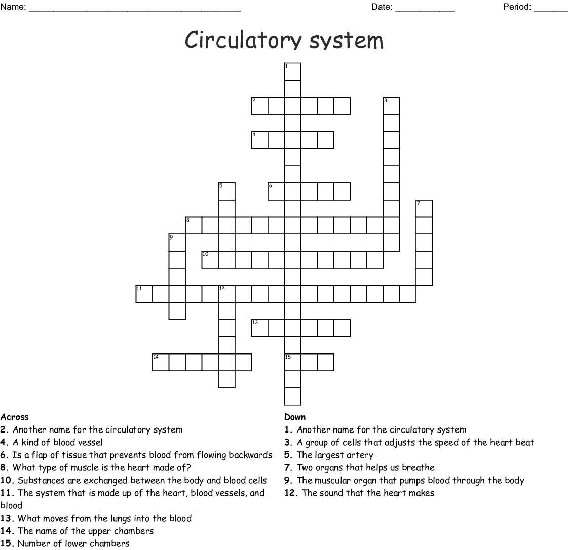 The Circulatory System Worksheet Answer Key