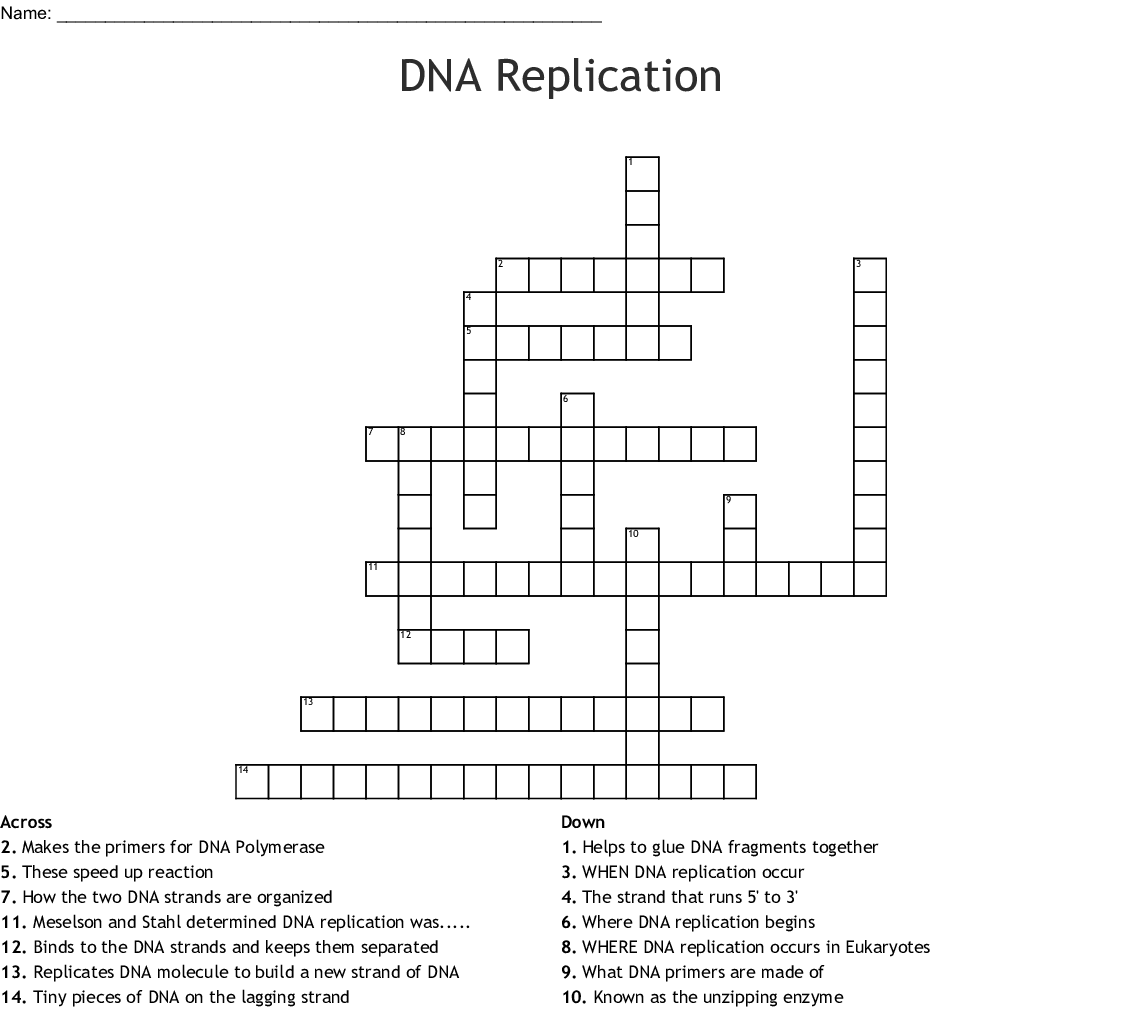 Dna Replication Crossword