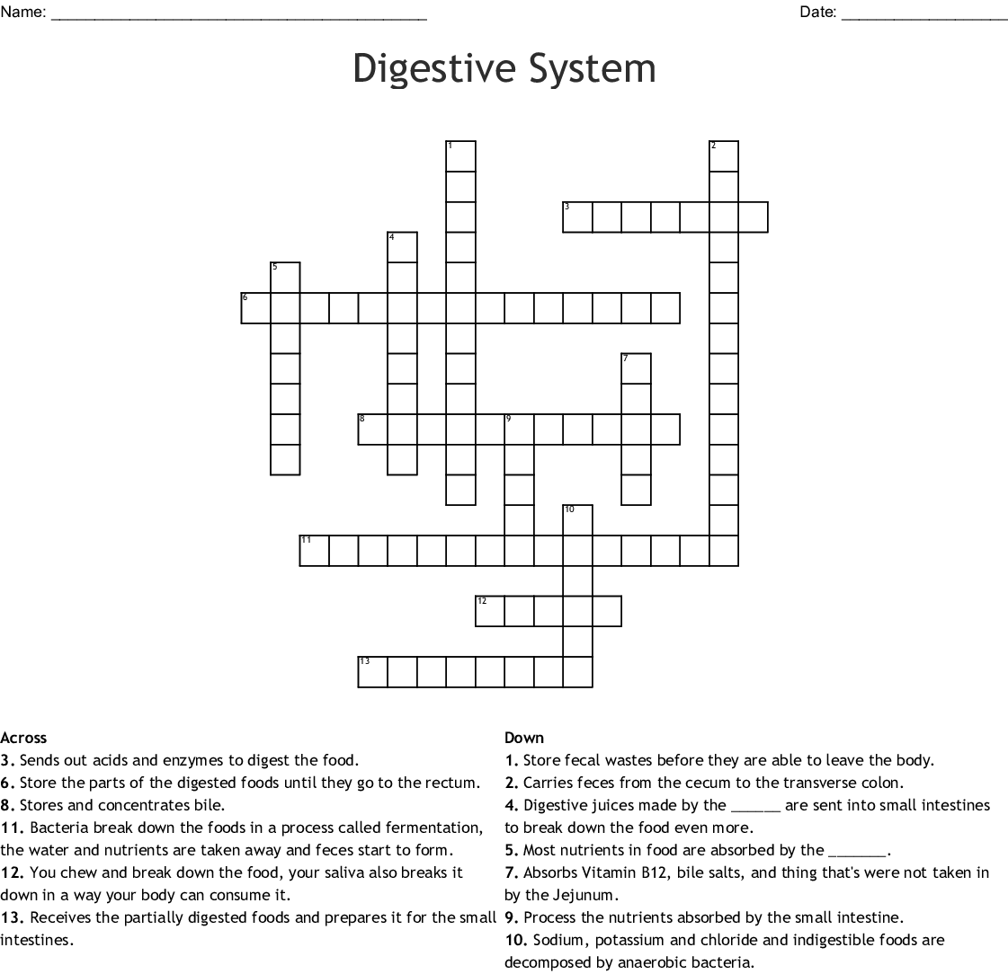 Digestive System Crossword Puzzle For Chocolate