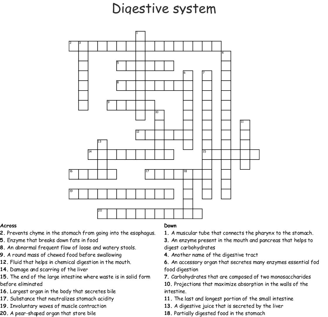 The Digestive System Crossword