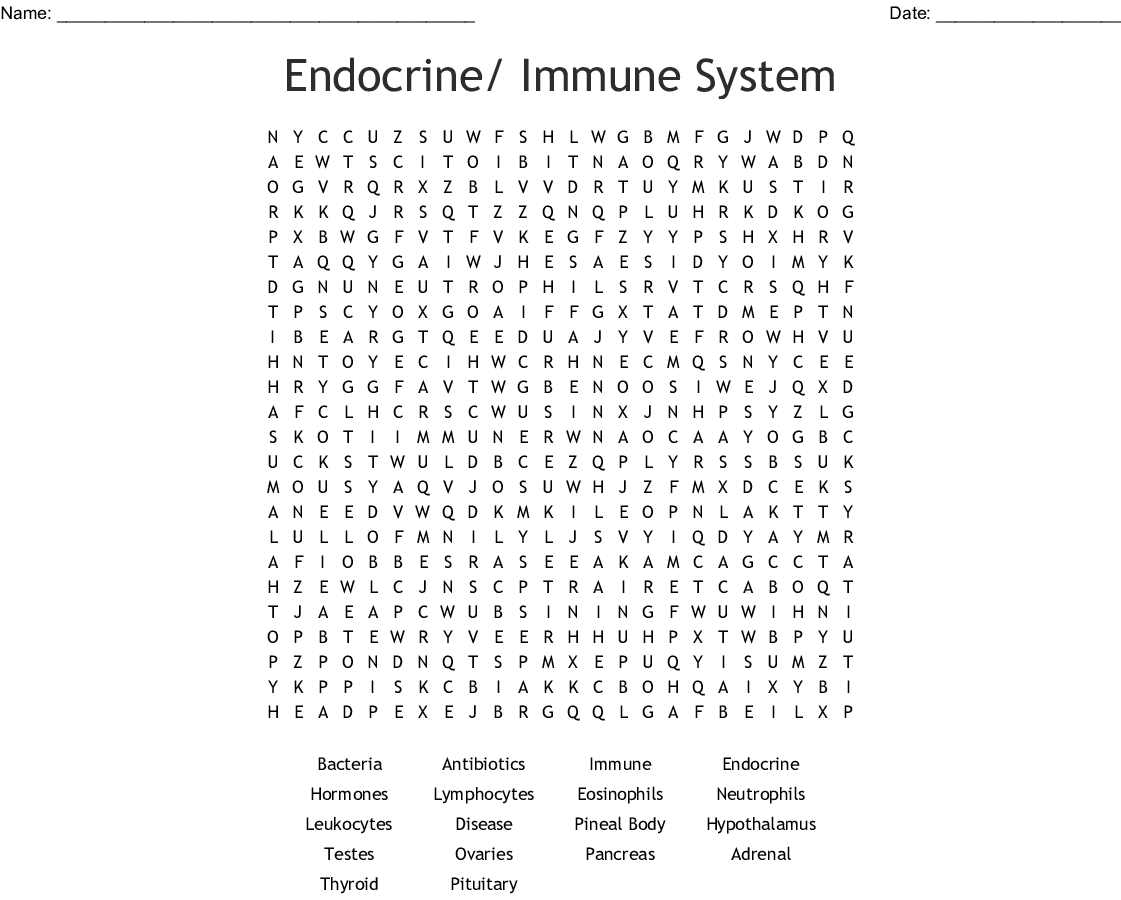 Endocrine Immune System Word Search