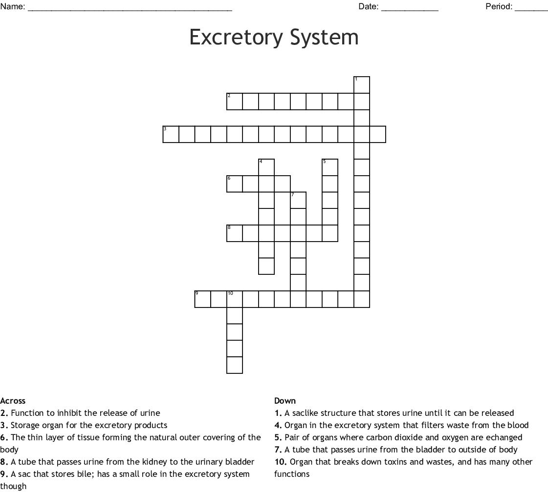 Excretory System Crossword