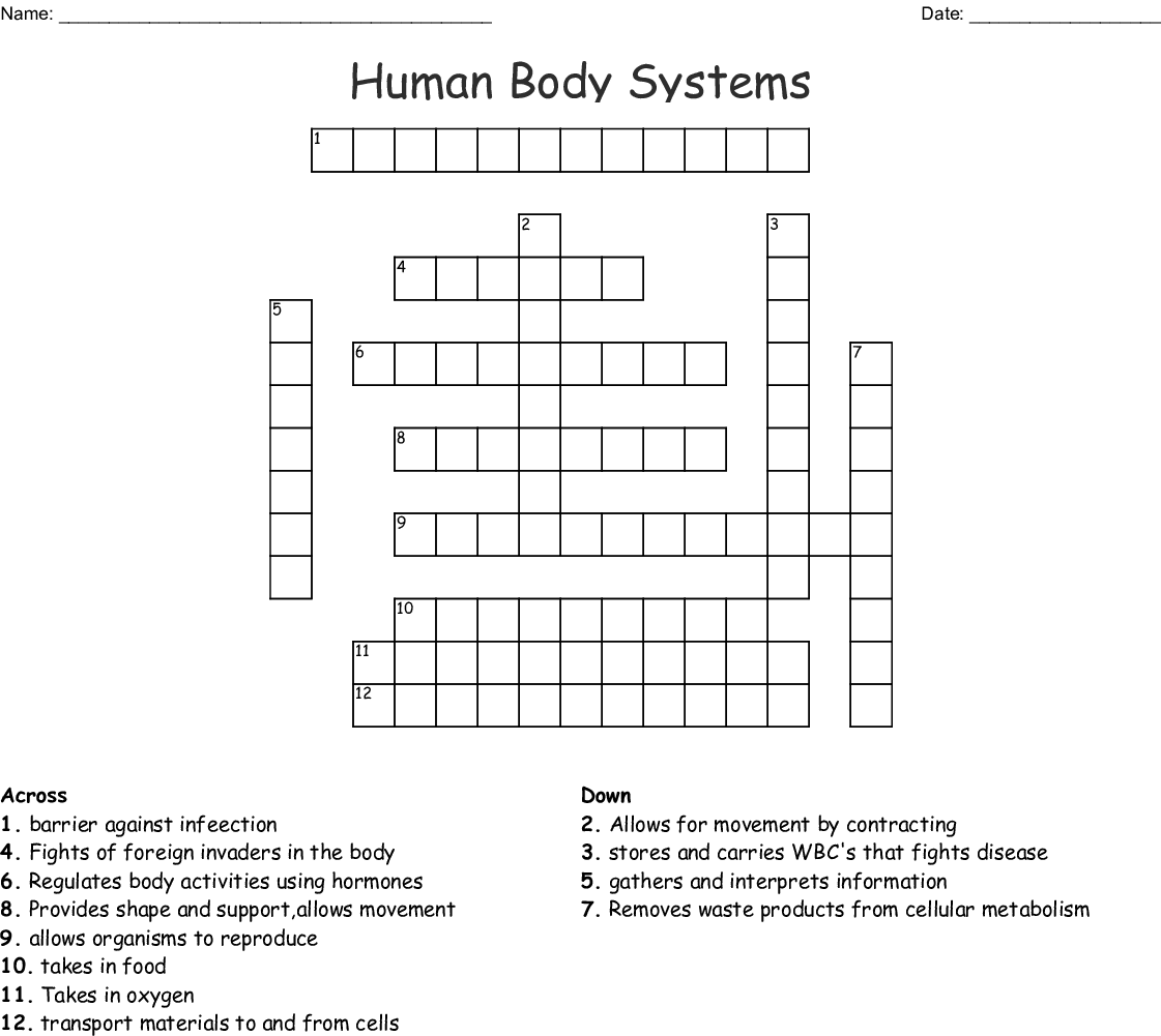 Systems Of The Human Body Word Search