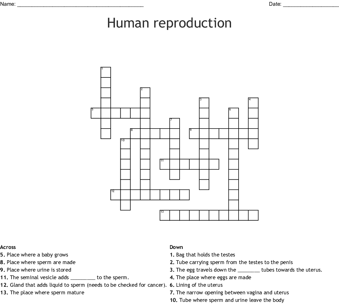 Crossword Puzzle Respiratory System Diagram Crossword