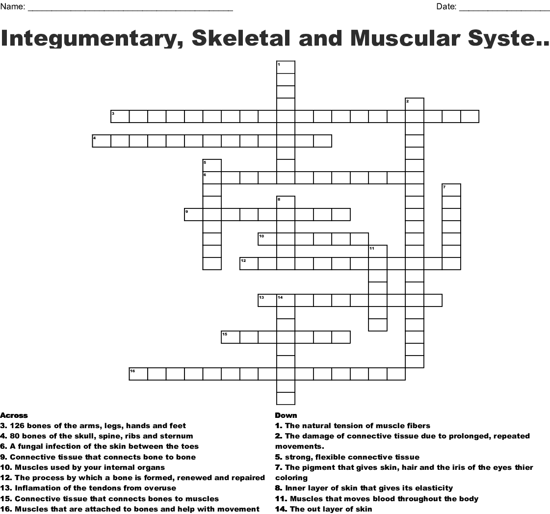 Integumentary Skeletal System Worksheet