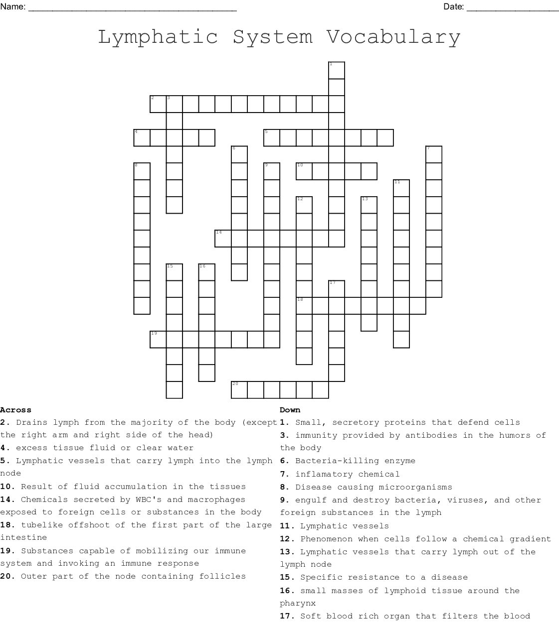 Immune System Crossword