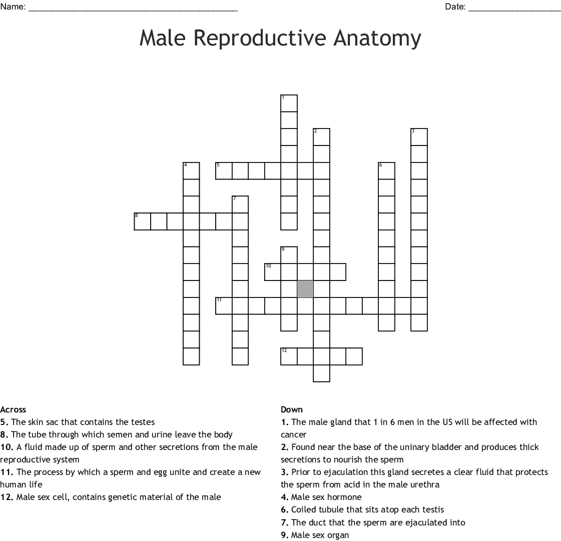 Male And Female Reproductive System Crossword
