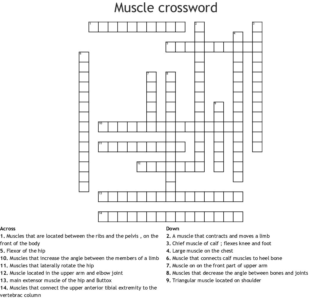 Muscle Crossword