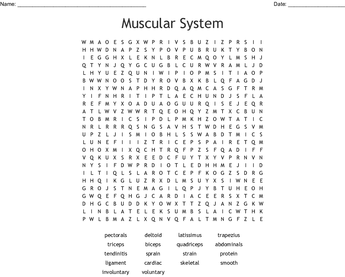 Muscular System Word Search