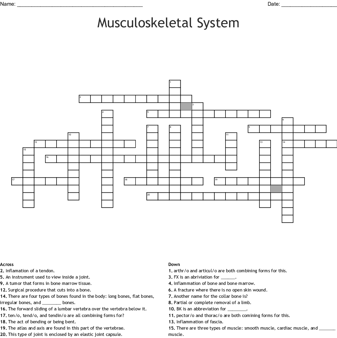 Musculoskeletal System Chapter 4 Crossword