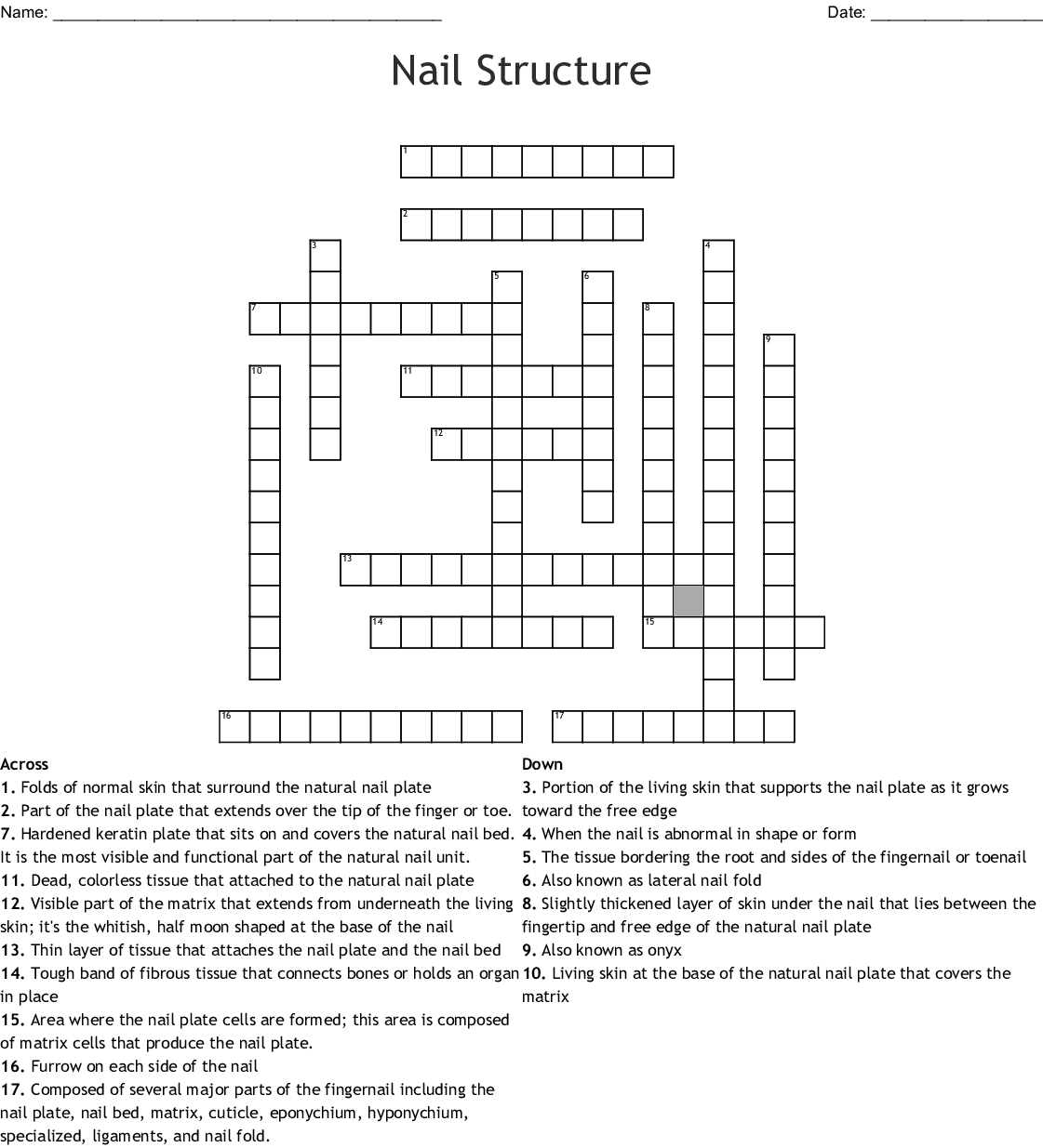 Nail Structure Crossword
