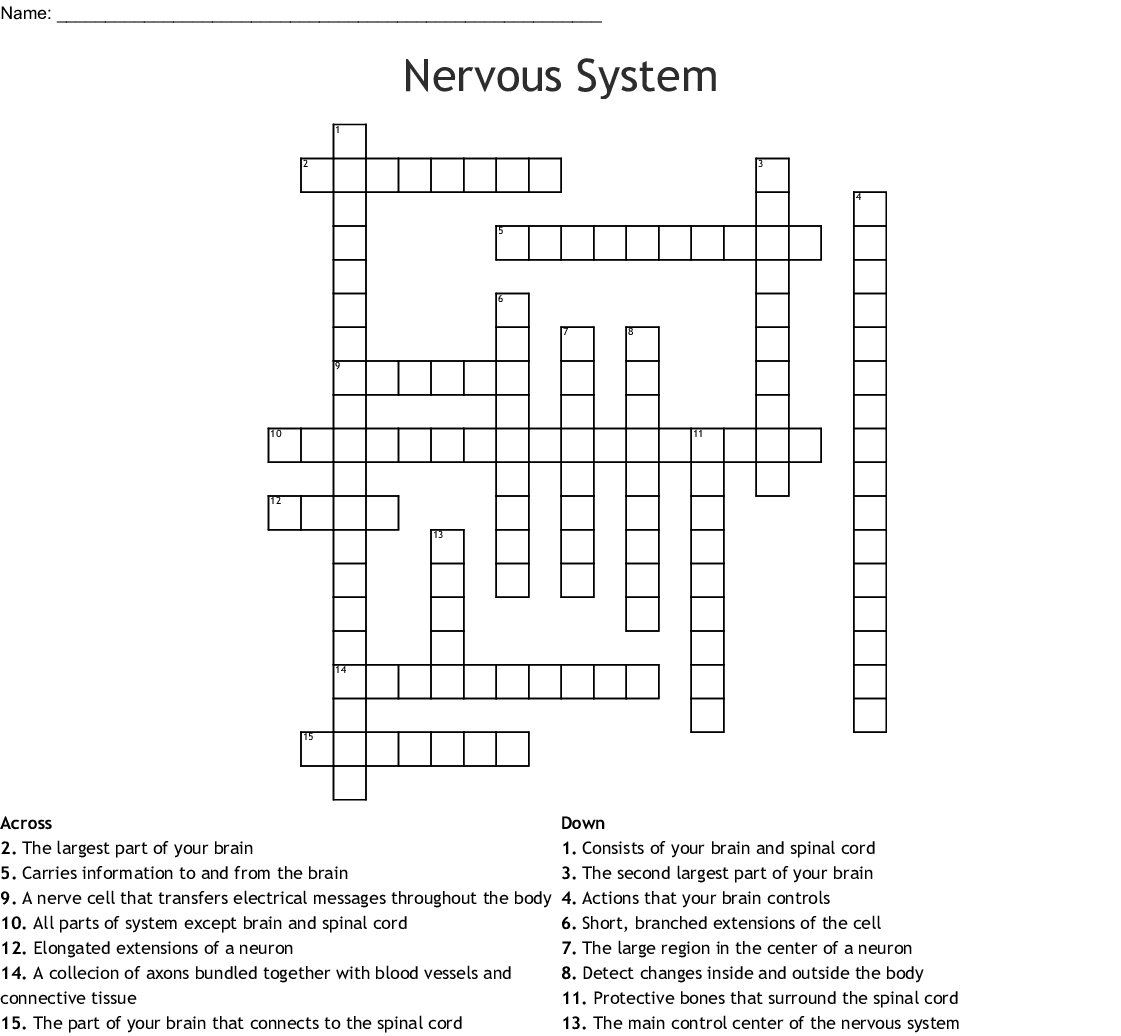 The Nervous System Crossword