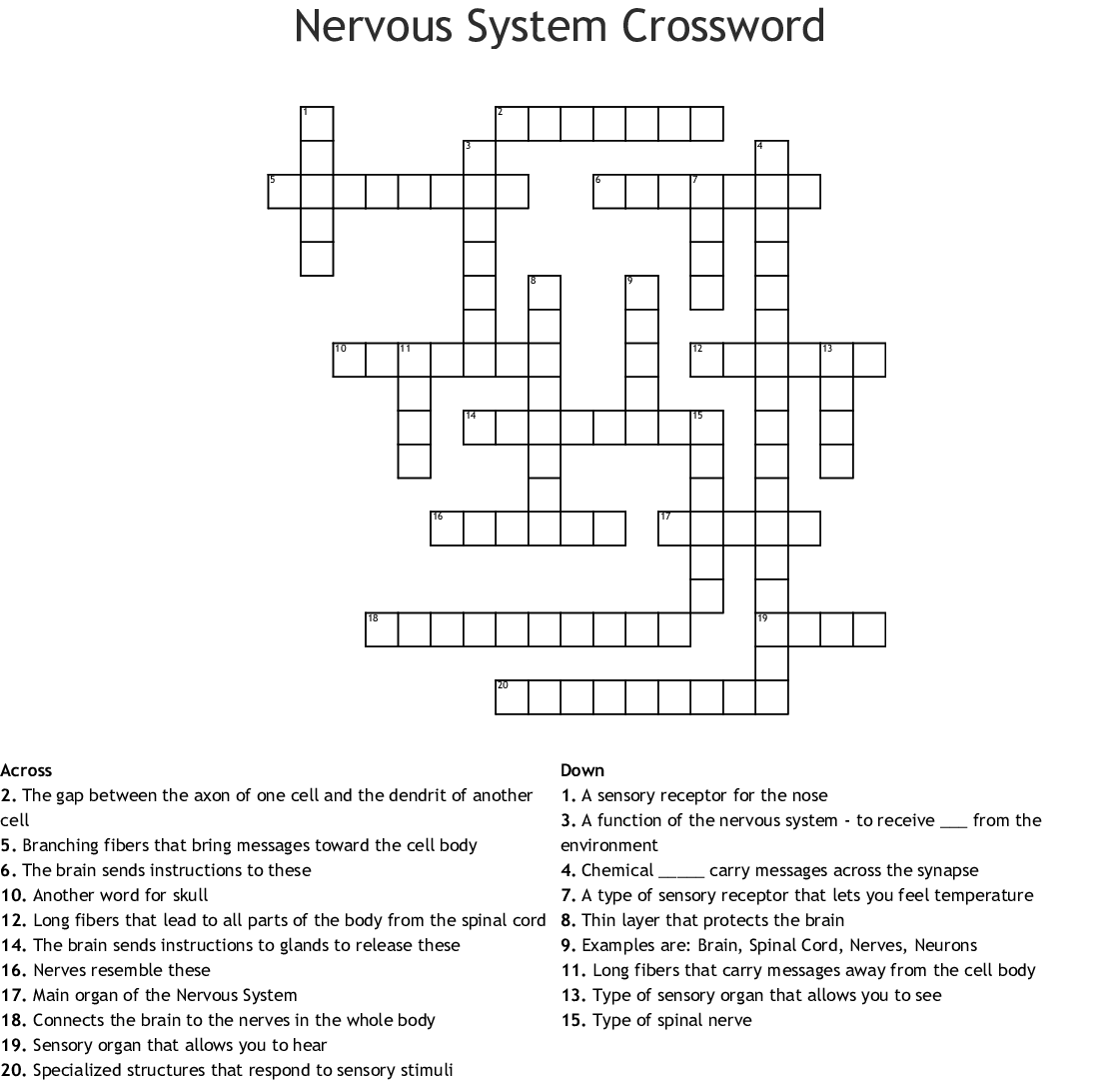 7th Grade Nervous System Crossword Puzzle Answer Key