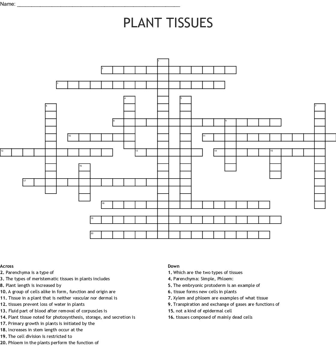 Plant Tissues Crossword