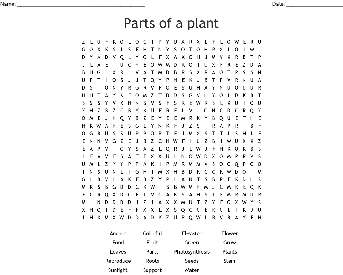 Parts Of A Plant Word Search