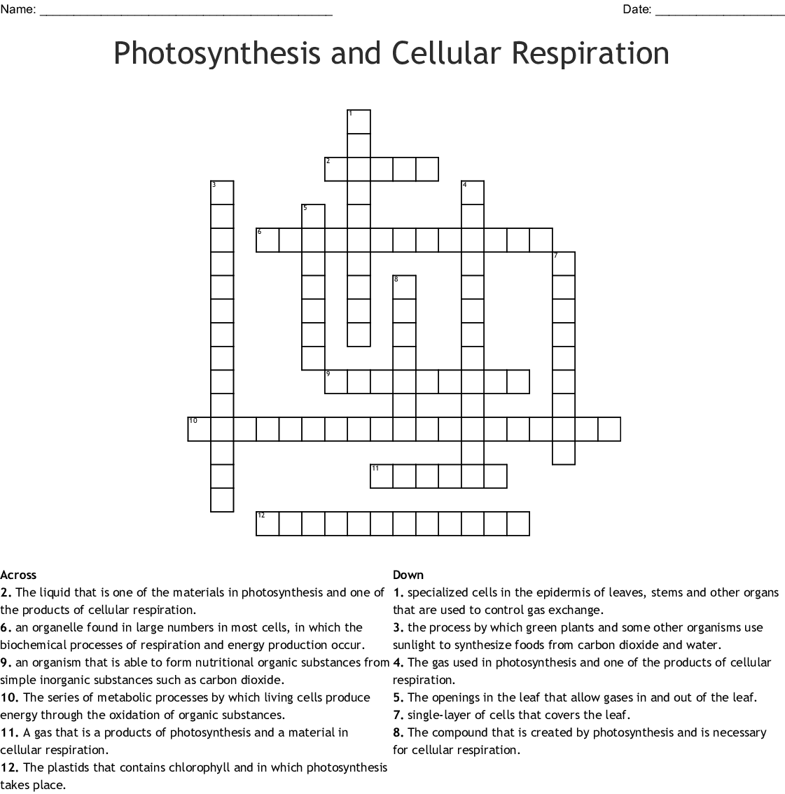 Photosynthesis And Cellular Respiration Crossword