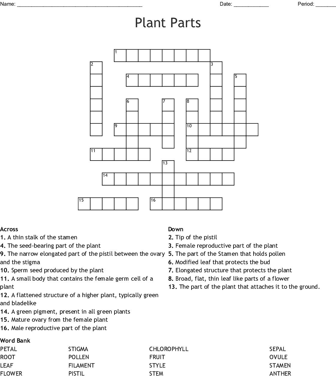 Leaf Anatomy Worksheet Colored Answer Key