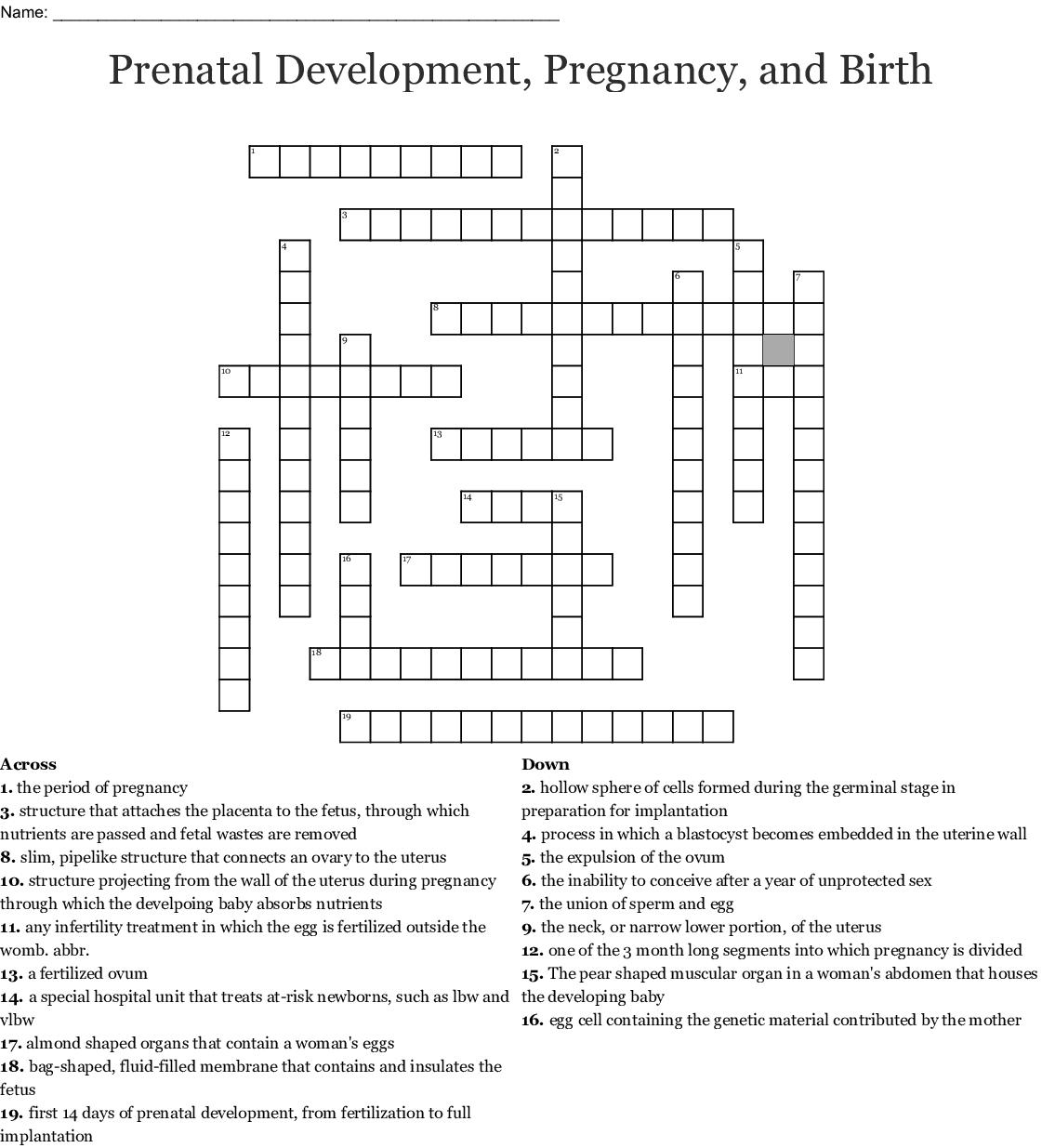 Prenatal Stage Crossword