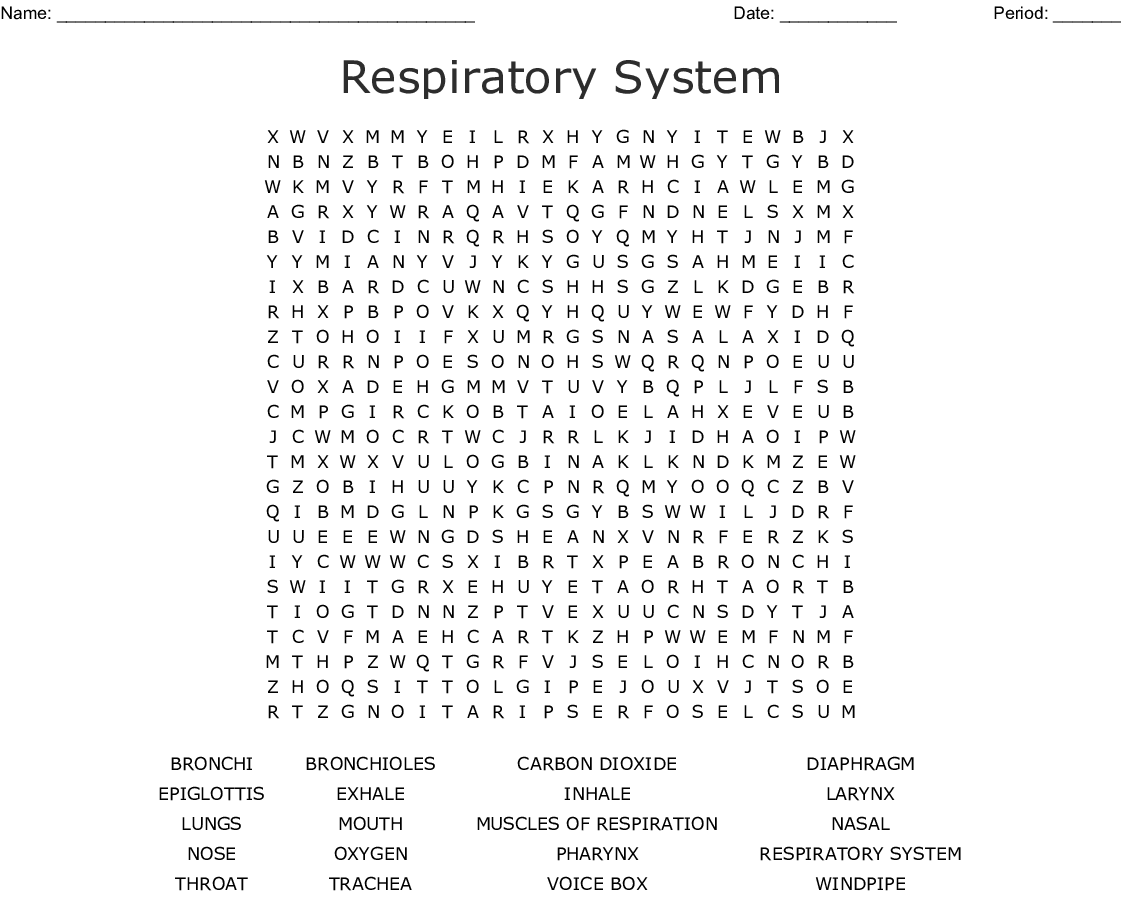 Respiratory System Crossword