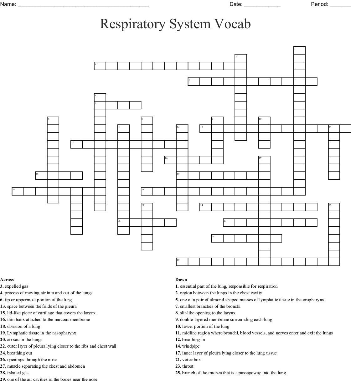 Respiratory System Crossword Puzzle