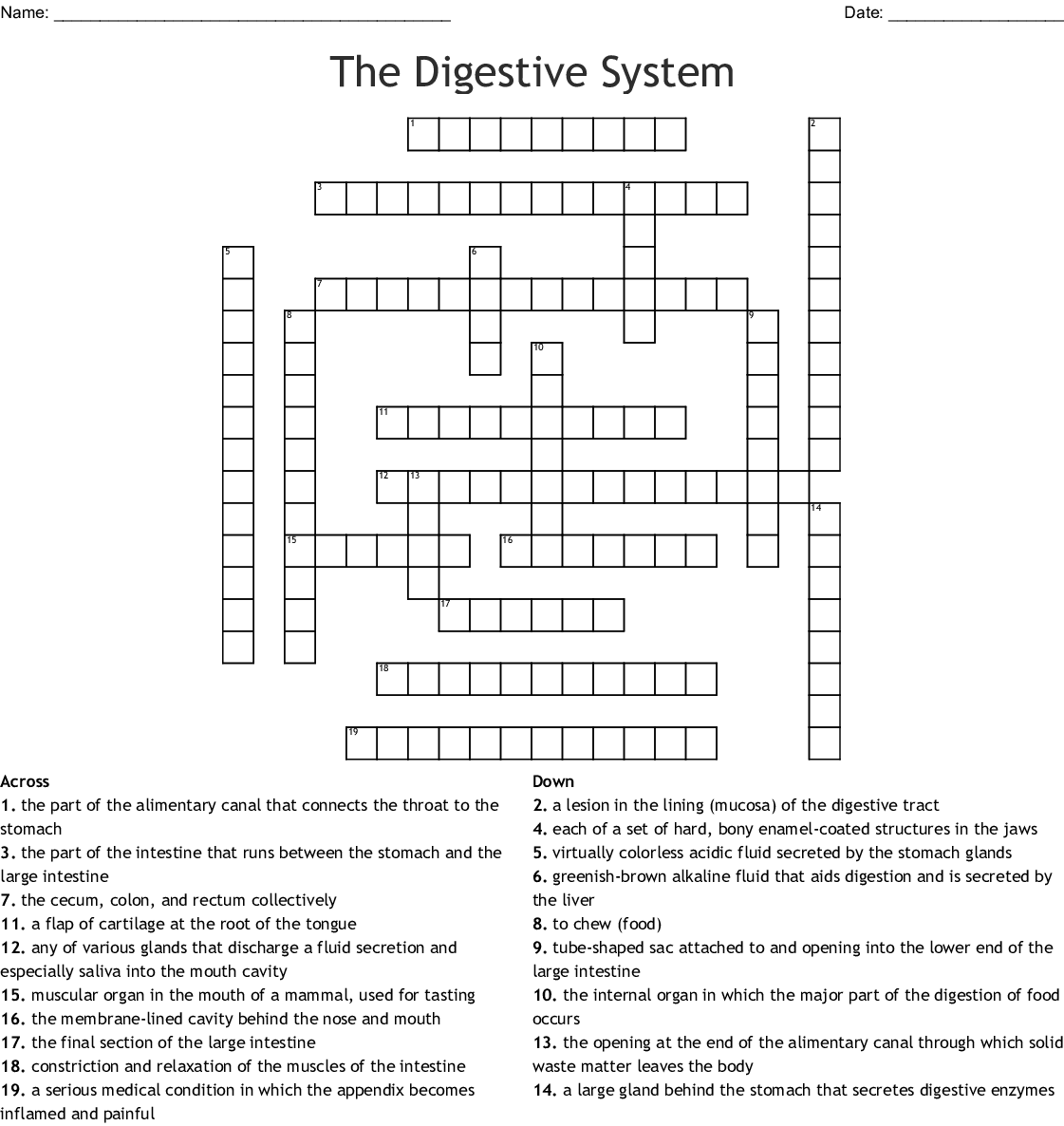 The Digestive System Crossword