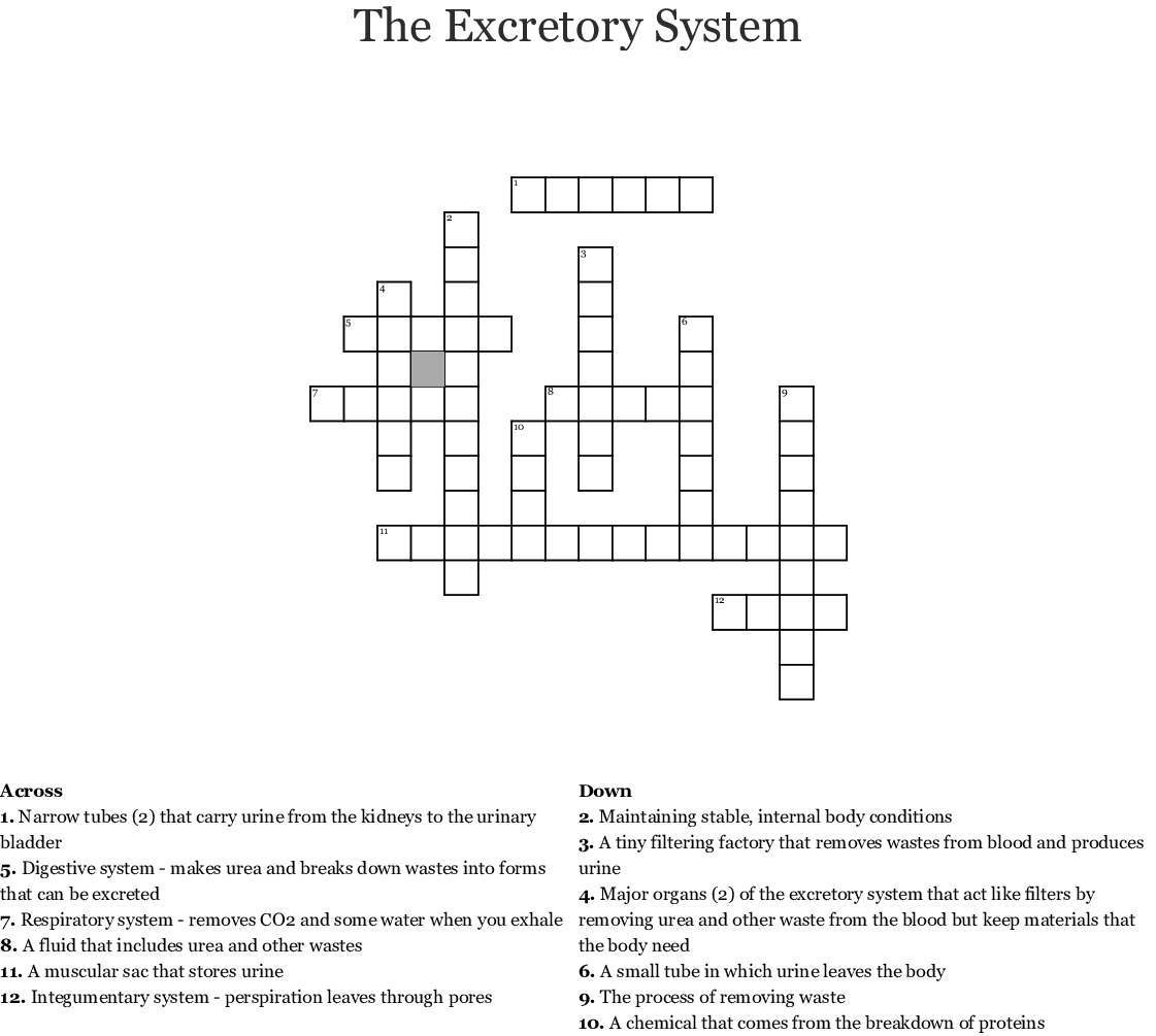 The Excretory And Urinary Systems Word Search