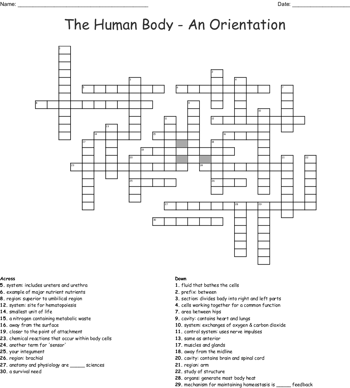 Anatomy Amp Physiology Crossword