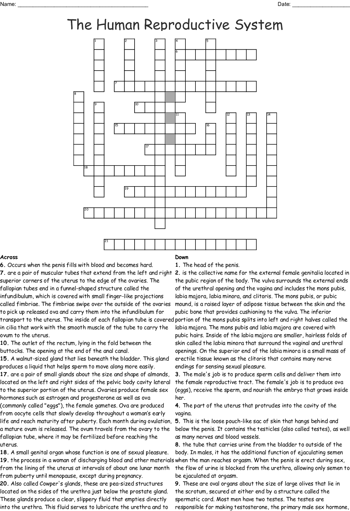 The Human Reproductive System Crossword