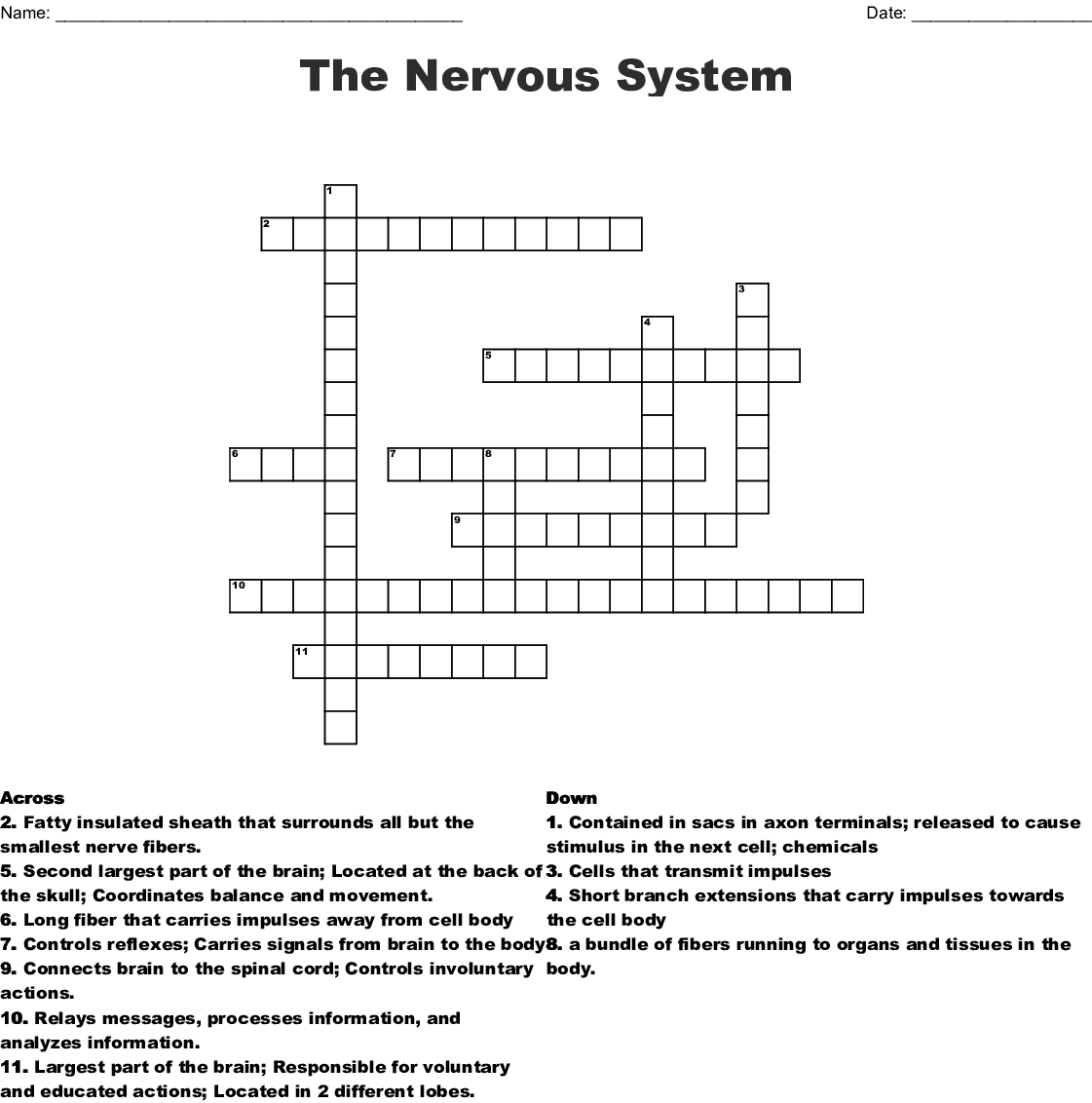 Biology Nervous System Crossword
