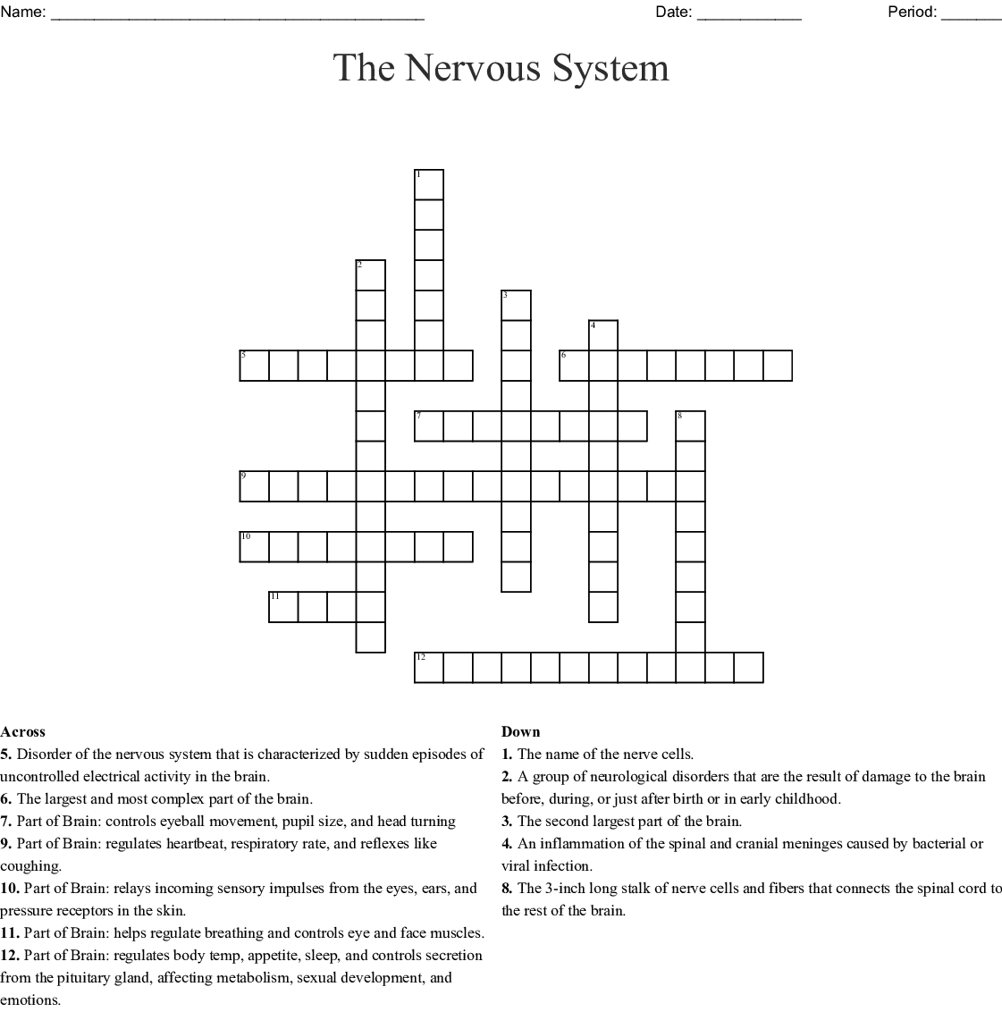 Nervous System Cells Worksheet