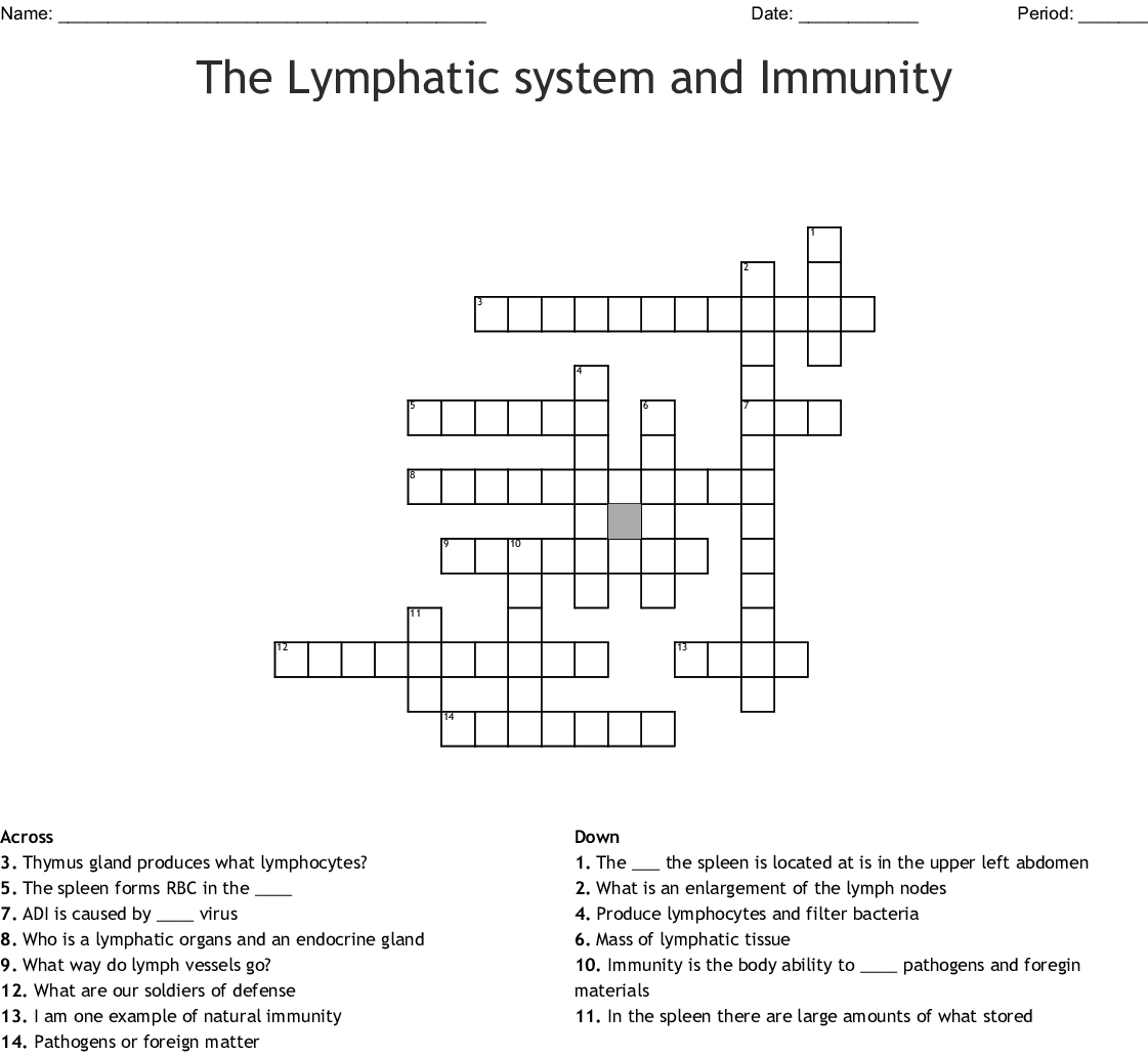 Lymphatic System Word Search