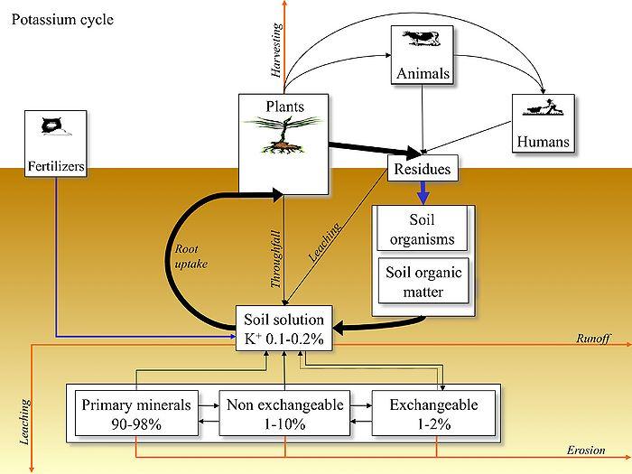 potassium-in-viticulture