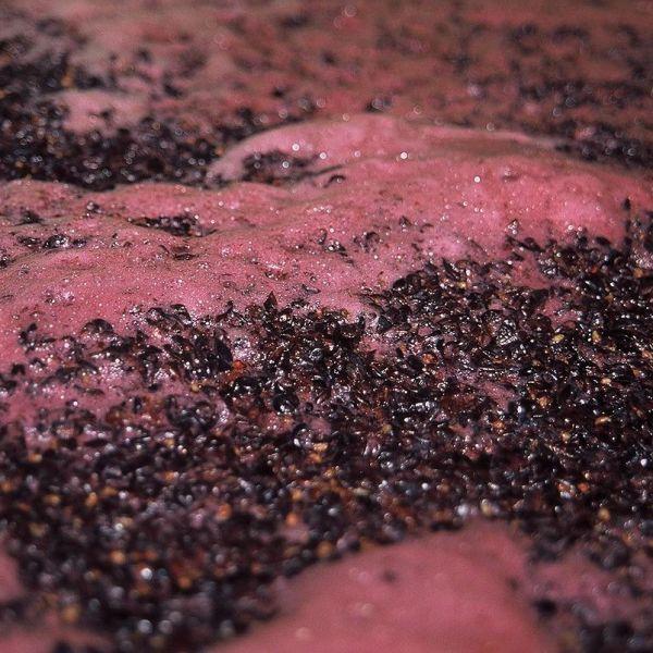 cap-management-winemaking