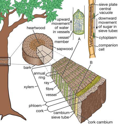 oak in winemaking