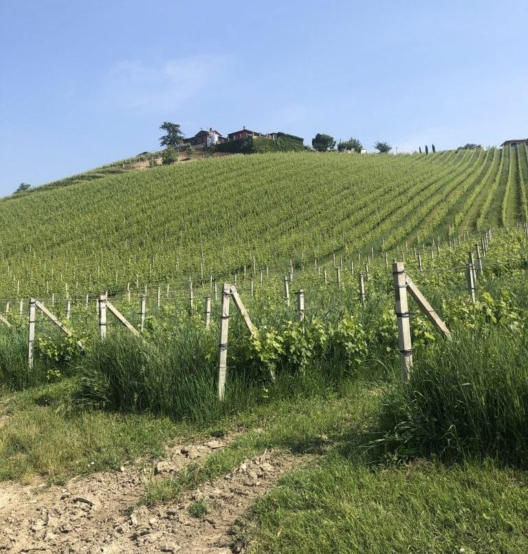 gaja-viticulture-piedmont