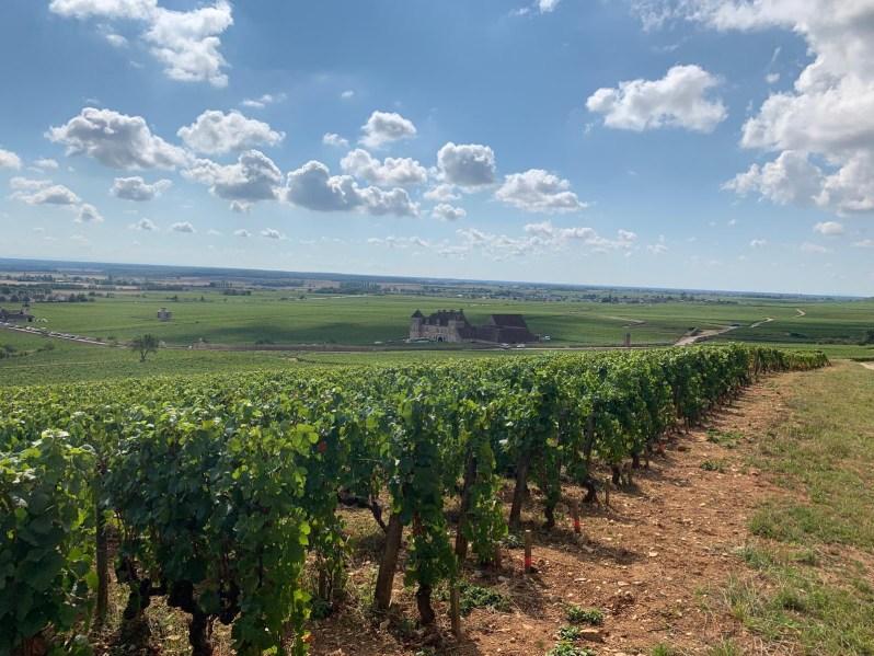 terroir-burgundy