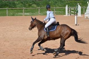 horse-806397_1920 - kopia