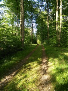 forest-1119279_1920