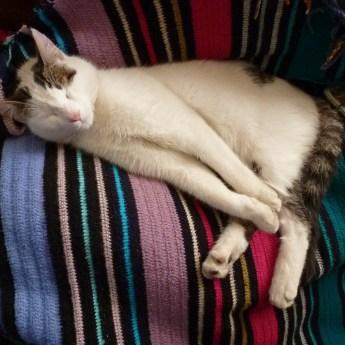 cat-73472_1280